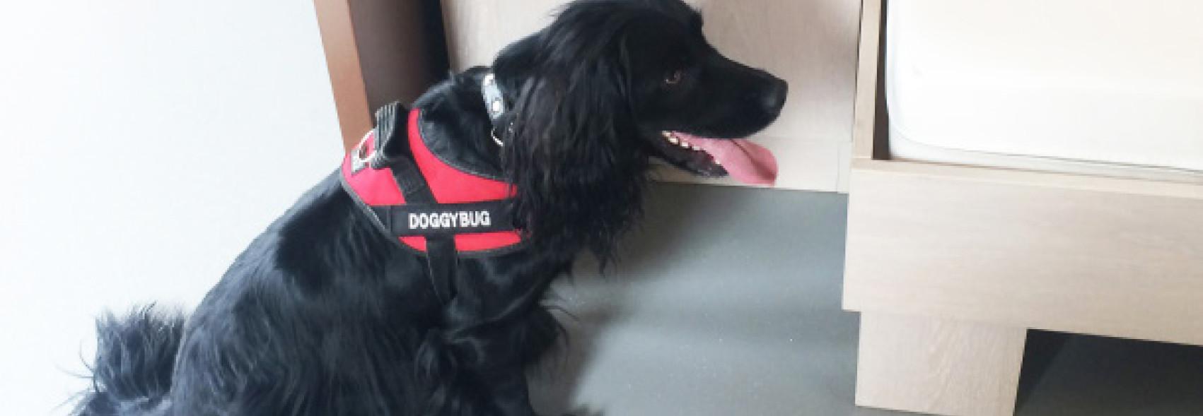 Doggybug Est Une Entreprise Specialisee Dans La Prevention Et La